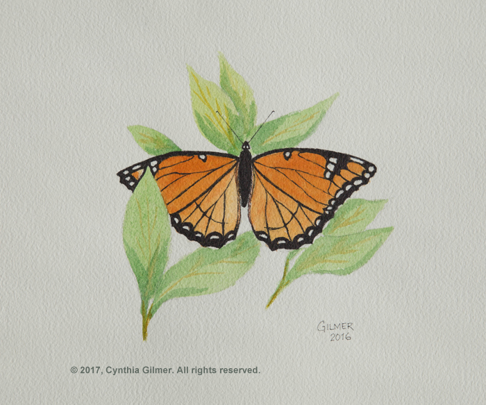 15a Butterfly 2