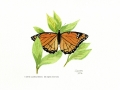 15a Viceroy Butterfly
