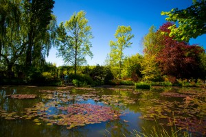 Monet Water Lily Pond Photo